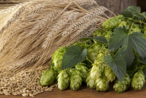 still life with barley malt and hop cones